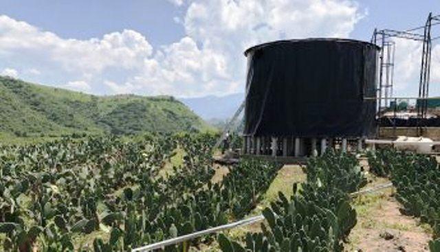 Mexicanos crean combustible de nopal, limpio y a 12 pesos el litro