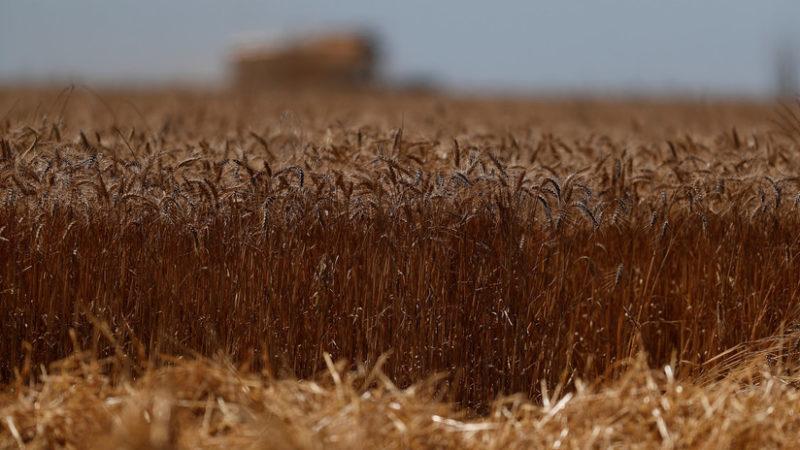 Hambrunas por cambio climático que afecta a la agricultura, advierten científicos de la Universidad de Washington