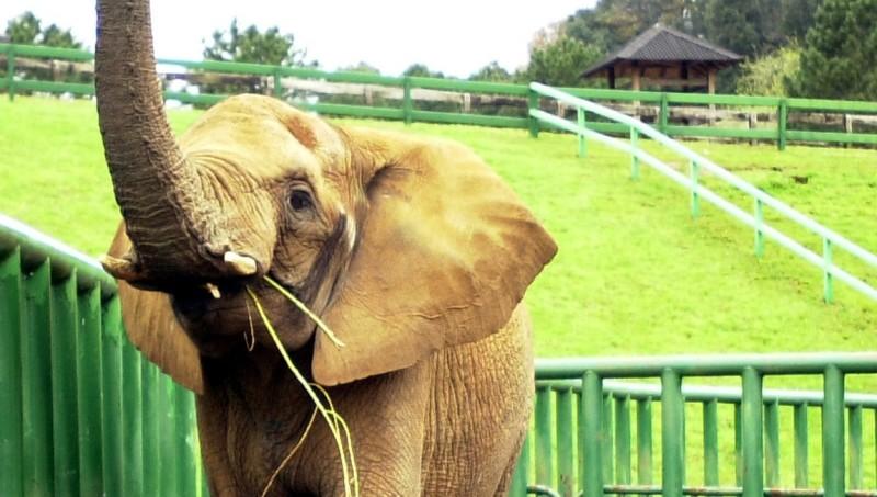 Los humanos podrían dejar de padecer cáncer gracias a los elefantes