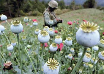 Política global de drogas, una década de fracasos: Informe