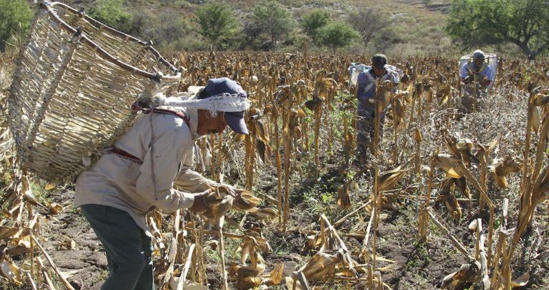 Campesinos mexicanos dicen que el USMCA, como sucedió con el TLCAN, los llevará a más pobreza