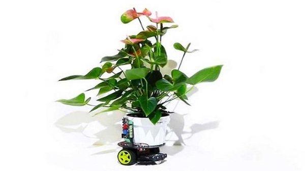 Crean planta robot capaz de buscar luz por sí sola