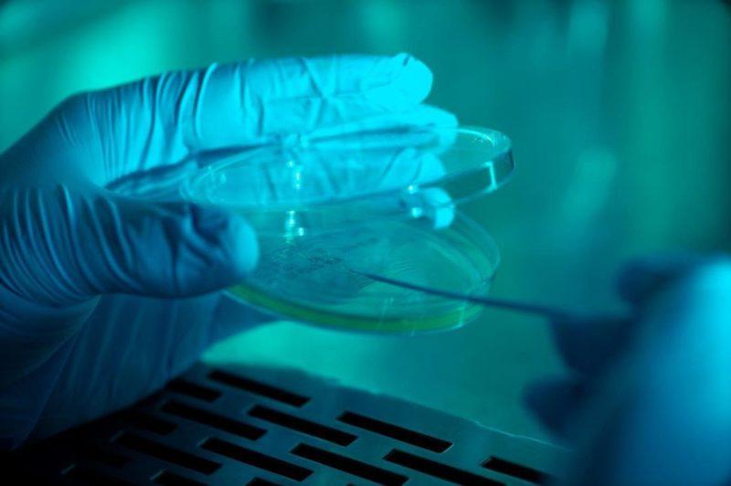 Científicos fabrican los primeros vasos sanguíneos