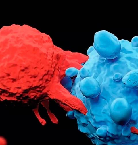 Descubren gen determinante en células cancerosas
