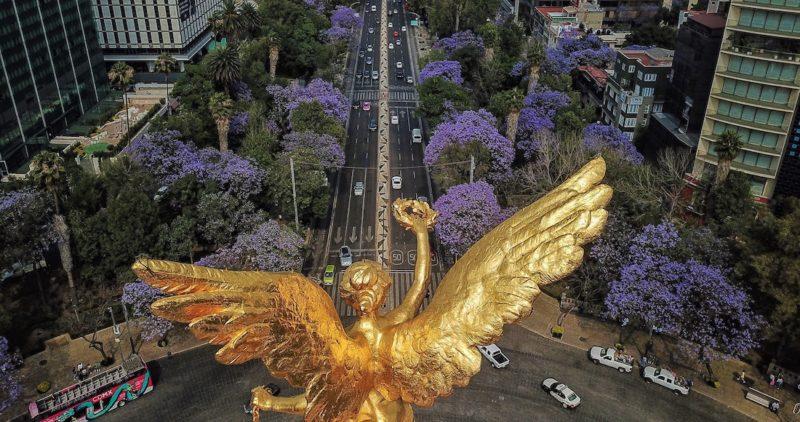 Primavera morada en la Ciudad de México ¿Por qué tantas jacarandas pintan las calles citadinas? Fueron dos japoneses. Aquí la historia