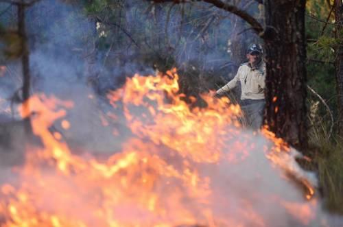 Destruye un incendio 500 hectáreas de bosques en Veracruz