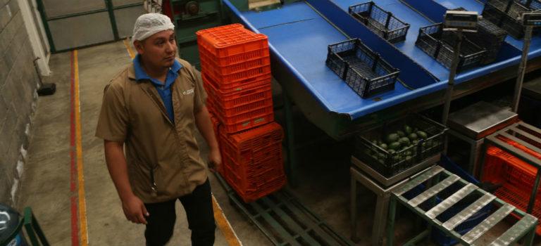 En el primer trimestre aumentó 2.7% el ingreso laboral real de la población: Coneval