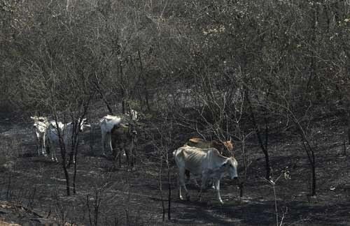 Nuevos incendios en la Amazonia brasileña; ya ha sido arrasados 1.2 millones de hectáreas