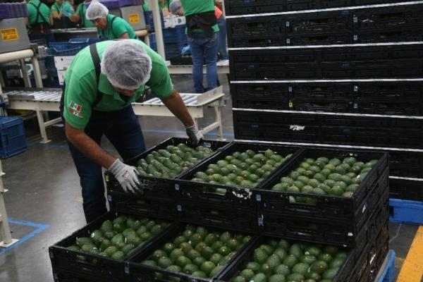 México, único en América Latina que aumentó exportaciones por conflicto EU-China, asegura el Banco Interamericano de Desarrollo