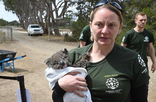 Video: Estiman que más de mil millones de animales han muerto por incendios en la isla Canguro, en Australia