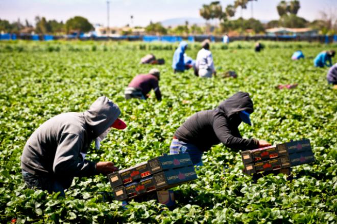 Orden ejecutiva del gobernador Newsom apoya a trabajadores agrícolas, de supermercados , repartidores y de comida rápida