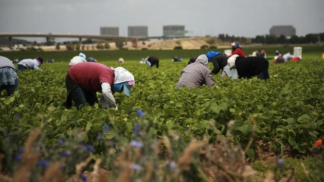 Piden a autoridades locales proteger a trabajadores sin papeles en tiempo de coronavirus