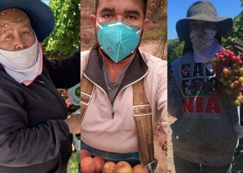 Trabajadores del campo pueden optar hasta $3,000 para cubrir gastos de renta, gasolina, y alimentos