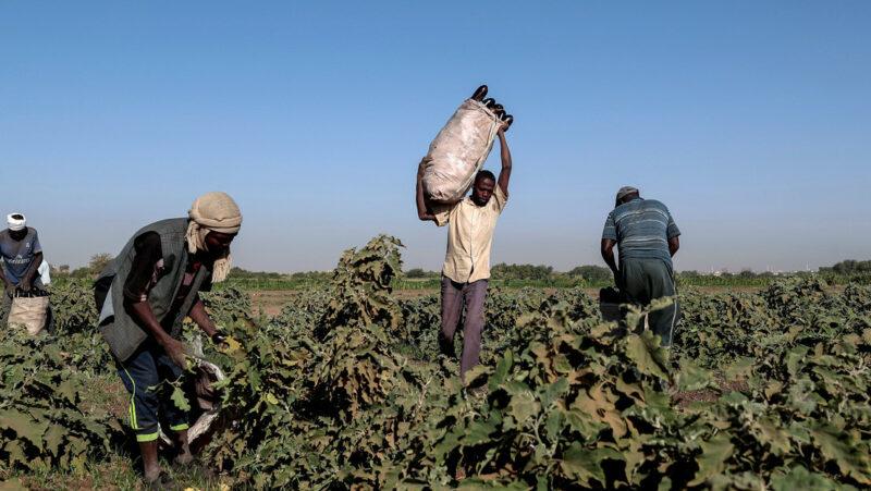 Videos: La pandemia agrava la hambruna en el mundo que ya padecían 690 millones de personas:FAO