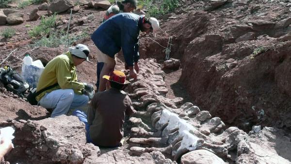 Video: Un dinosaurio hallado en Argentina podría ser el más grande de la historia. Pudo medir 40 metros
