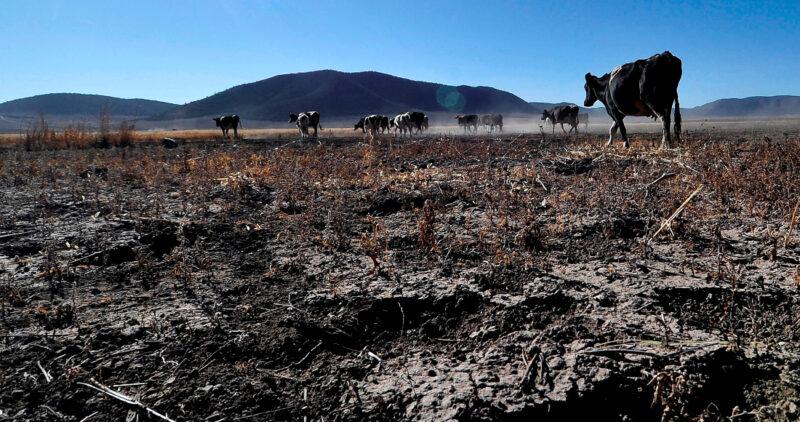La sequía se agudiza en México: casi 84% del país está afectado. Podría dañar al ciclo agrícola