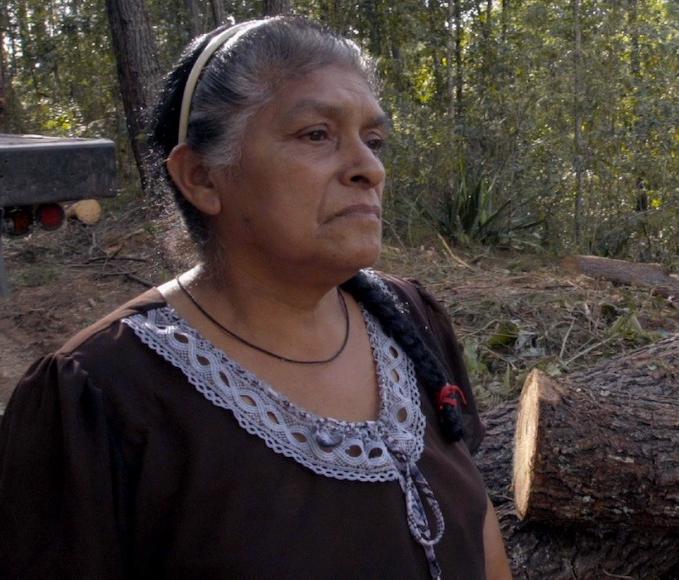 Video: Documental La luz del alba, la lucha y resistencia de cinco pueblos en México