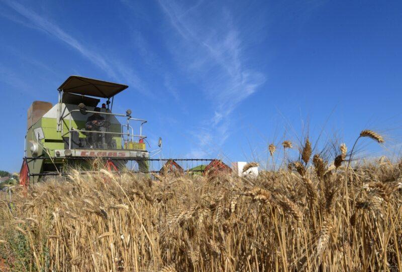 Precios mundiales de alimentos tocan un máximo de 10 años: FAO